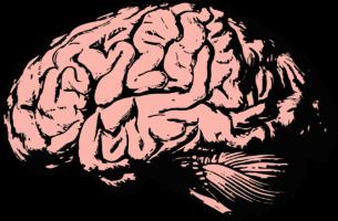 Menschliches Gehirn als Symbol für Fachbücher kaufen auf Büchervergleich.org